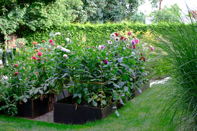 dieartigeGARTEN // August Garden - high beds with dahlias / Hochbeete mit Dahlien & Co