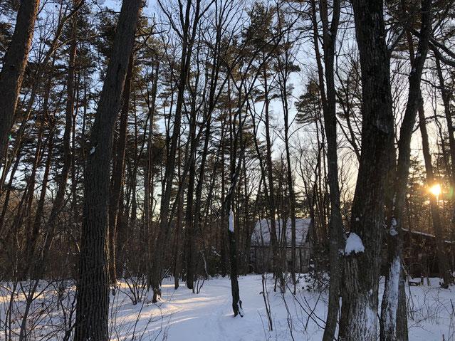 2月1日の夕暮れ。今日も日が沈む、、と焦りつつ、今年は珍しい積雪の林がそれでもきれいで撮影。
