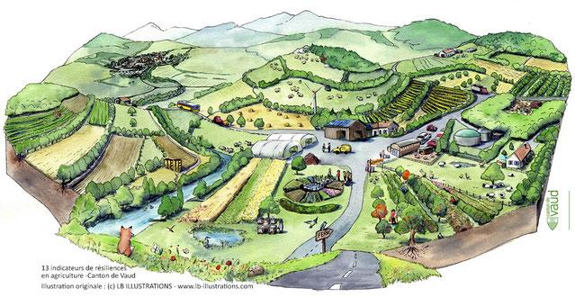 illustration, agriculture, naturel, nature, paysage, écosystème, résilience