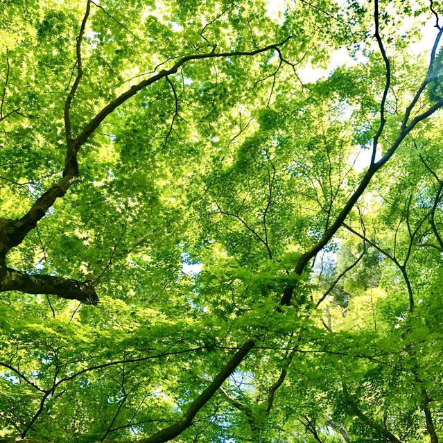 京都市下京区四条烏丸の心療内科、女医のいるメンタルクリニック、新緑