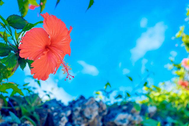 「本和香糖(ほんわかとう)」は沖縄の恵みがたっぷり詰まったお砂糖です