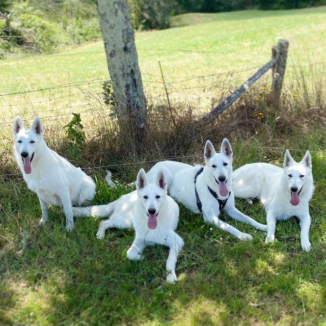 De gauche à droite: Pépite, Pacha, Izzy et Pepper