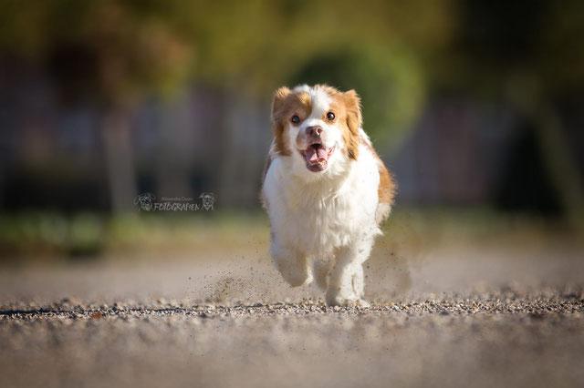 Hunde Homöopathie
