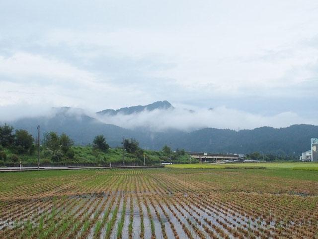 今朝の文殊山                                   朝晩は涼しくなり、稲の借り入れも半分ほど済み、山も秋の装いが進んでいる。