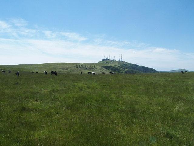 王ヶ頭をピークに広々とした高層平原(2000m前後)