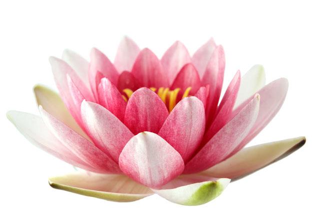 Ananda Ayurveda - Ayurveda Massage. Ankommen und sich wohl fühlen.