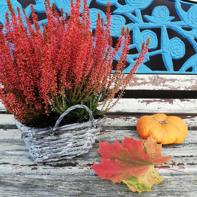 Kraftquelle, Herbstbild, Baum mit Bank, Kraft tanken im Herbst, Freitagslieblinge, Herbstimpressionen