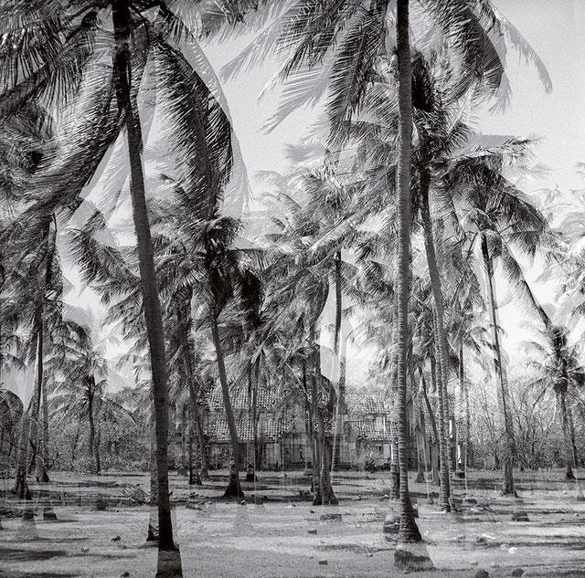 Palmen mit Haus, Costa Rica © Birgitta-Thaysen