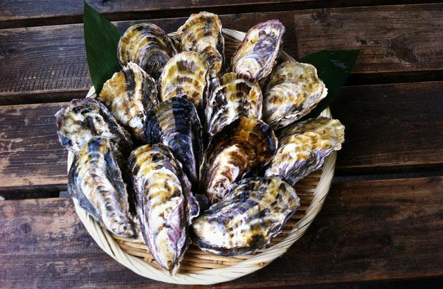 相生カキ 牡蠣殻付盛り合わせ