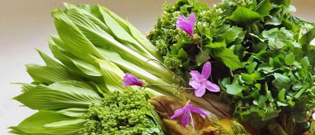 山菜料理春になって温かさを感じるようになると、それまで縮こまっていた私達の手足も力が緩みます。そして、血流の流れをよくしたり新陳代謝を促し解毒作用があるといわる春の山菜を食すことは、理にかなっていてとてもよいことなのです。瀬戸の筍たらの芽こしあぶら蕨こごみ血流促進新陳代謝解毒作用デトックス効果中津川恵那付知福岡田瀬美菜ガルテンふるかわ苗木城周辺食事処おんぽい周辺