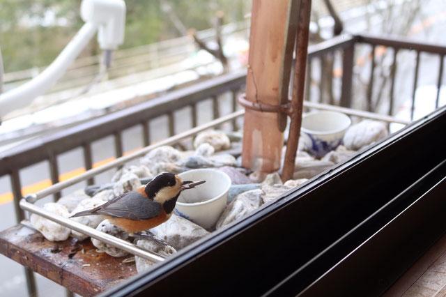 鳥の餌場がかまえられており、店内からほほえましい風景が見えますよ☆