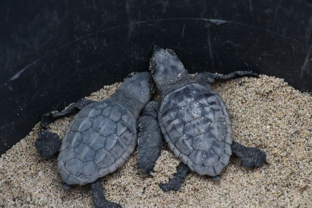 You could end up volunteering with sea turtles!