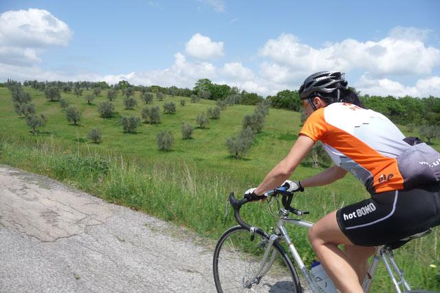 Rennradfahren in der Toskana. Schöne Landschaft, Olivenbäume, Sonne.