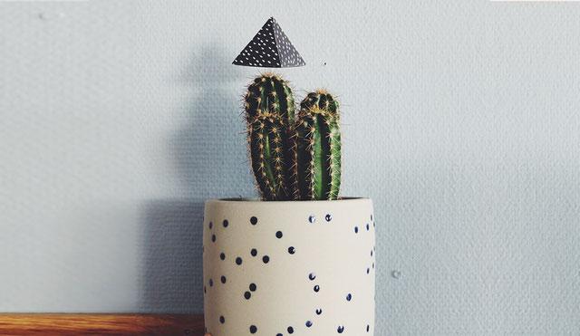 Vergiss Mein Nie Wutkapsel auf einem Kaktus aufgespießt
