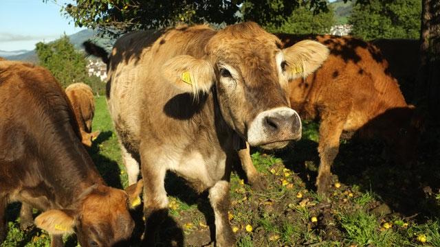 fleisch  hofgemeinschaft urenmatt  frische bioprodukte