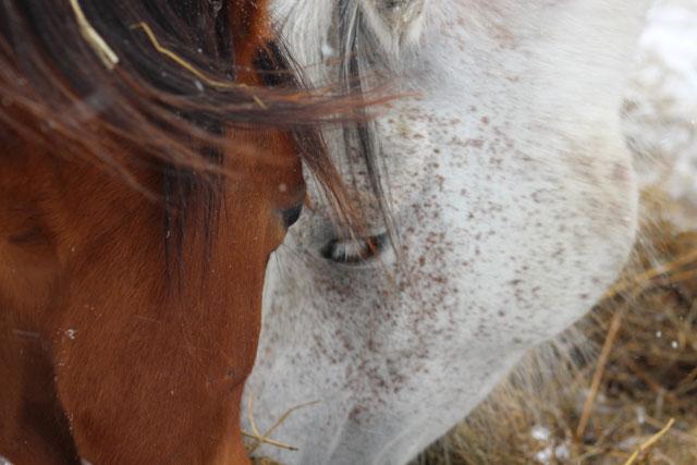 Pferdeliebhaber Tierkommunikation mit deinem Pferd sprechen und dein Pferd verstehen