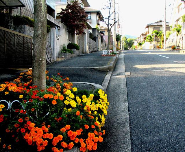 粟生新家の住宅街/道沿いにきれいなお花が・・・。