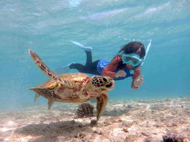 Miyakojima Sea Turtle Snorkeling & Skin Diving - 下地島空港