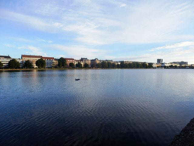 デンマーク コペンハーゲンの鳥を見てた早朝
