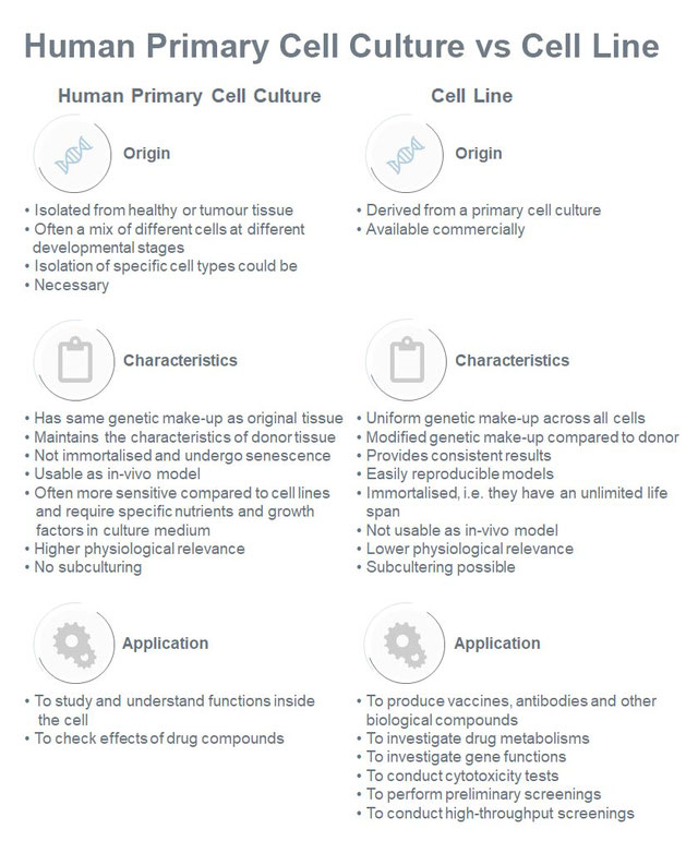 Difference between human primary cell culture and cell line (Oyeleye, O. et al., 2016).