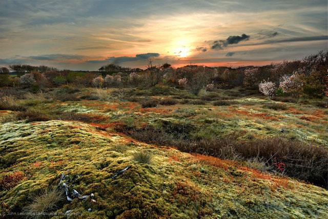 267. Texel zonsondergang met bloeiende krentenbomen in de achtergrond