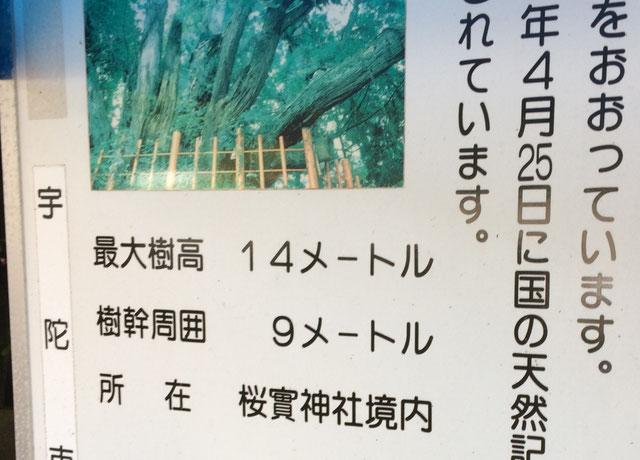 桜實神社(筆者撮影)