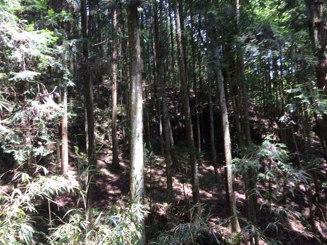 兎田の高城(筆者撮影)