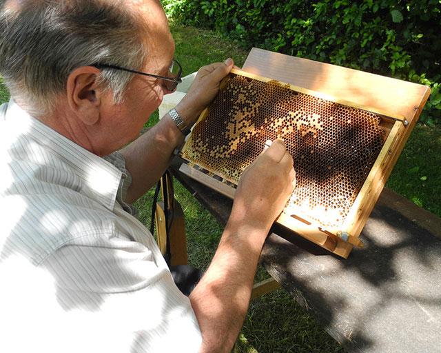 beim Umlarven, Bienenzuchtverein Merkstein, Bienen Merkstein, Bienen Aachen, Bienenverein Merkstein, Bienenverein Aachen, Biene, Bienen, Merkstein