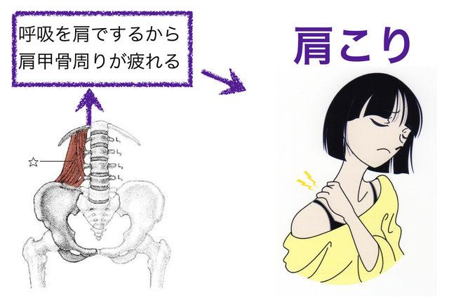 呼吸を肩でするから肩甲骨周りが疲れる▶肩こり