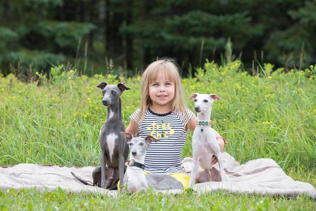 Adoption Elevage Les Grandes Pattes Levrier Italien Au Quebec