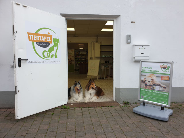 zwei Collies im Eingang der Tiertafel RheinErft e.V.