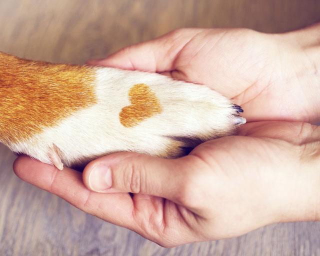Hundepfote in Hand