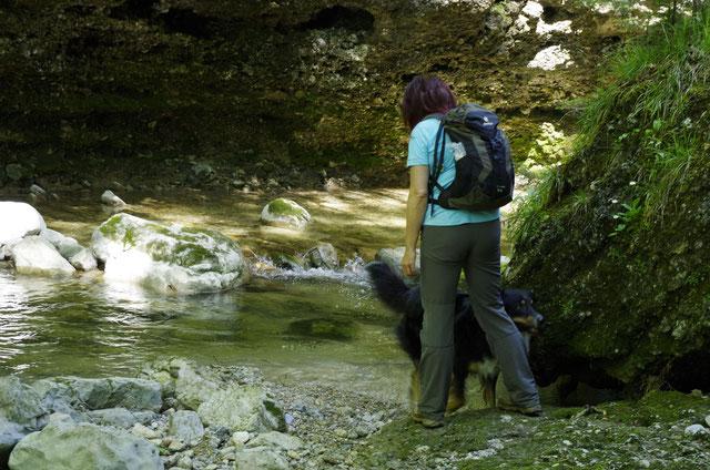 Wandern mit Hund am Wasser: Glasenbachklamm