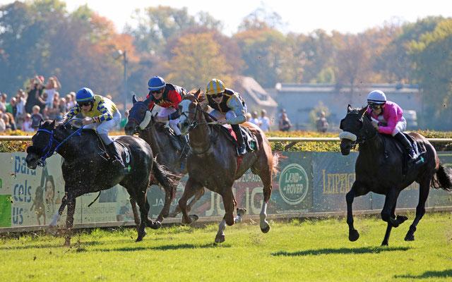 Renn-Pferd beim Pferde-Rennen