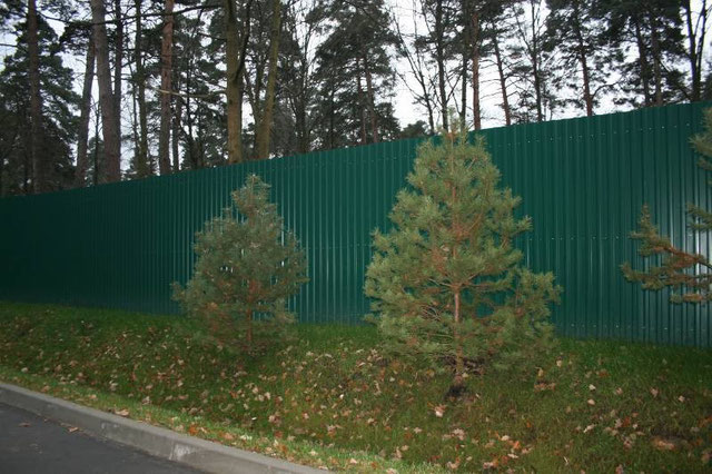 Забор из профлиста талдом радивилвськ ворота