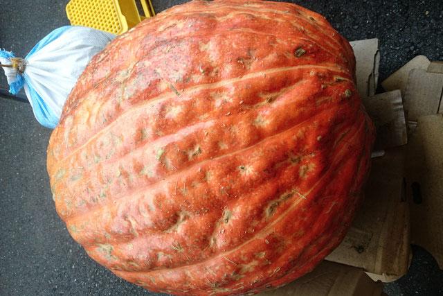 ハロウィーンの大きなかぼちゃ