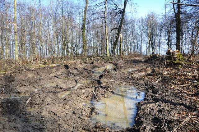 Holzeinschläge seit 2016 mit Harvester-Schwertechnik, Rückegassen von mind. 5 m Breite in Abständen von 20 m, aufgerissen bis zu den Waldrändern im Ettersberger Staatswald