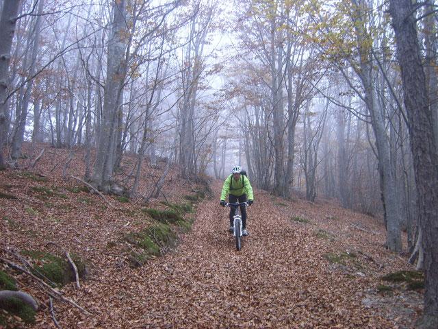 """Dice il Saggio   """"L'insidia delle foglie  su di un terreno pietroso...   ... rende il sentiero assasi pericoloso!!!"""""""