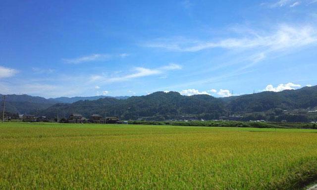 天竜川沿いに広がる田園風景