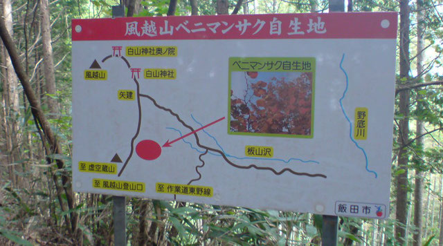 秋に赤く紅色の葉を見せるベニマンサク