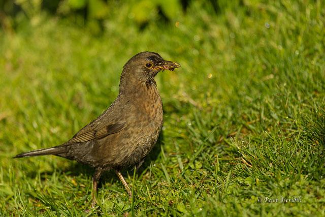 Wind und Meer, die Wellen des Nordatlantik, es ist immer was besonderes, Wasser in Bewegungen zu sehen. Die verschiedenen Farbtöne, das Aufbauen und wieder Zusammenbrechen der Wogen ist beeindruckend.