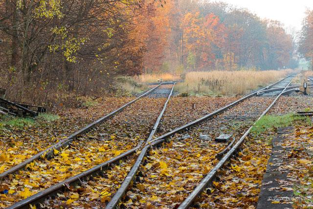 Gleise im Herbst mit für die technische Infrastruktur nötige Bahnschienen, im sich verfärbendem Laub und leichtem Nebel. Fotografiert in Stormarn, Deutschland.