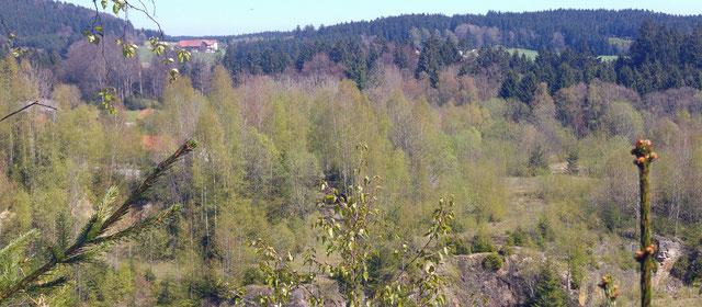 Blick vom Steinbruch Ach zum Aherndl (Mittereddt) ...