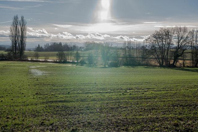 en longeant la frontière entre l'Allemagne et la Suisse (5 janvier 2018, a7rii + Sigma 50mm) - frontière invisible, mais bien réelle et effective pourtant, séparant l'Union européenne du reste du monde: hie Neuhausen CH, da Jestetten D.