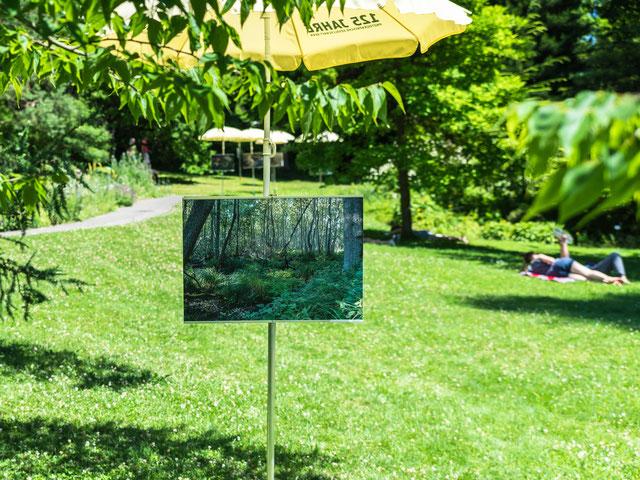 Eines der Photos von Peter Köppel an der Ausstellung im Botanischen Garten Bern 2017, Darss 2009.