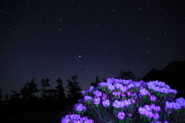 満開の石楠花と星空【Ⅱ】