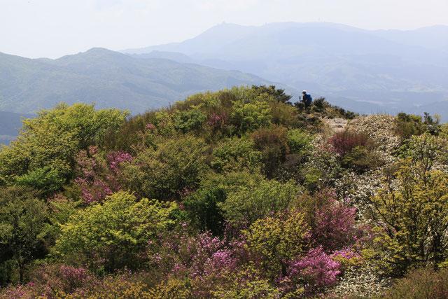 井原山山頂より脊振山方面を望む