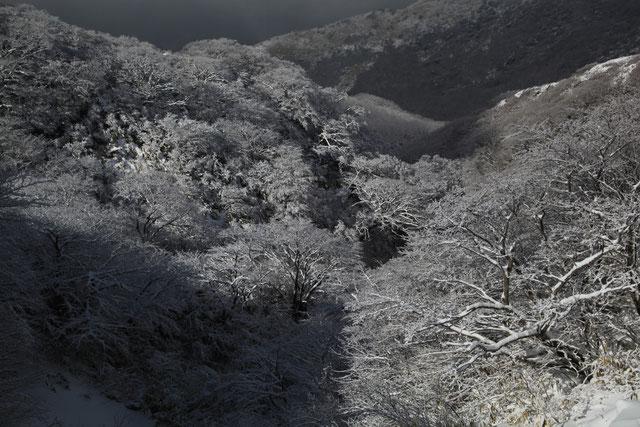 鍋谷の樹氷