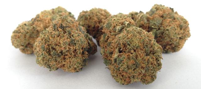 Cannabis Fermentierung 1 Monat vs 3 Monate