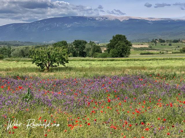 Bild: Blick auf den Mont Ventoux